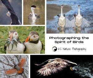 Photographing the Spirit of Birds with Krisztina Scheeff @ Zoom